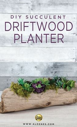 Picture of DIY Driftwood Succulent Planter
