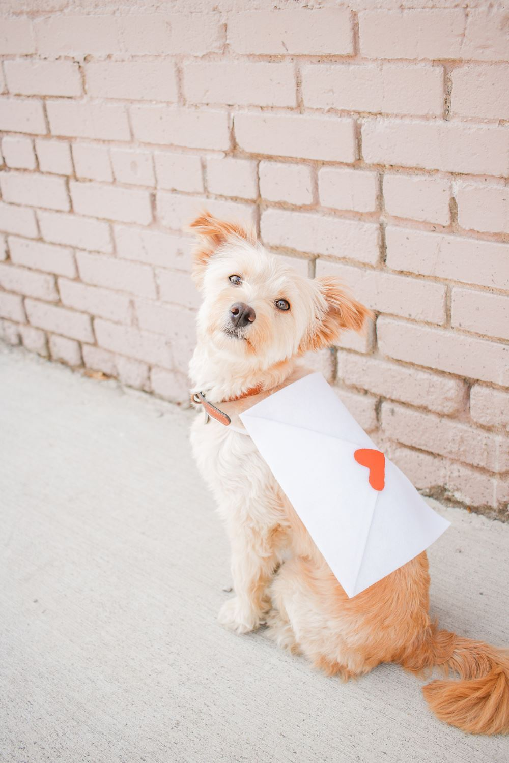Love Letter Pet Costume