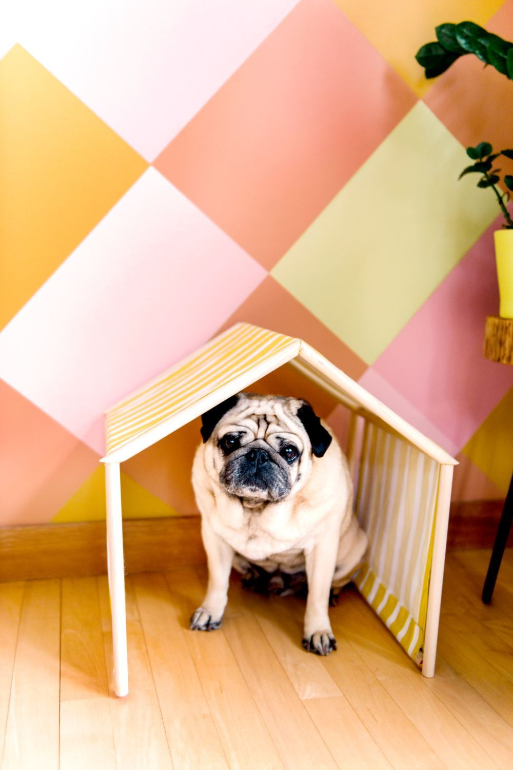 No-Sew Pet Canopy with Fabric Fusion